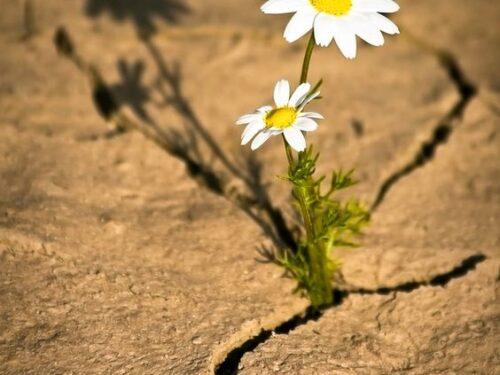 Resilienza: cos'è e come potenziarla.